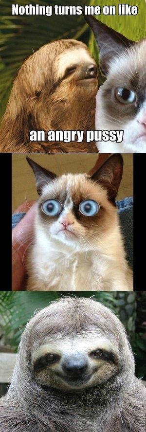 creepy sloth meets grumpy kitty | Funny stuff | Funny ...