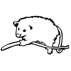 Top 10 Possum Opossum Coloring Pages For Your Kids Opossum
