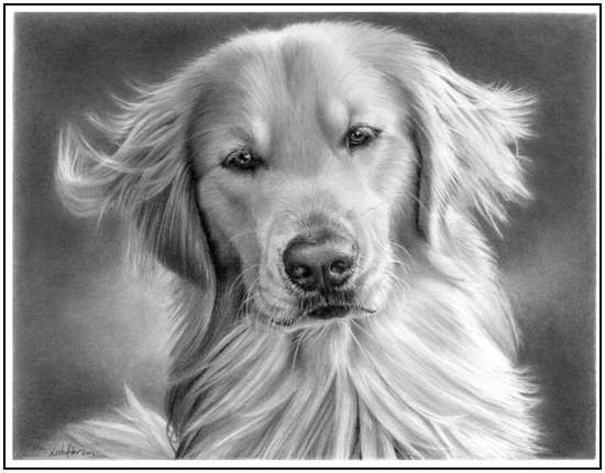 Incredibly realistic pencil drawings by linda huber