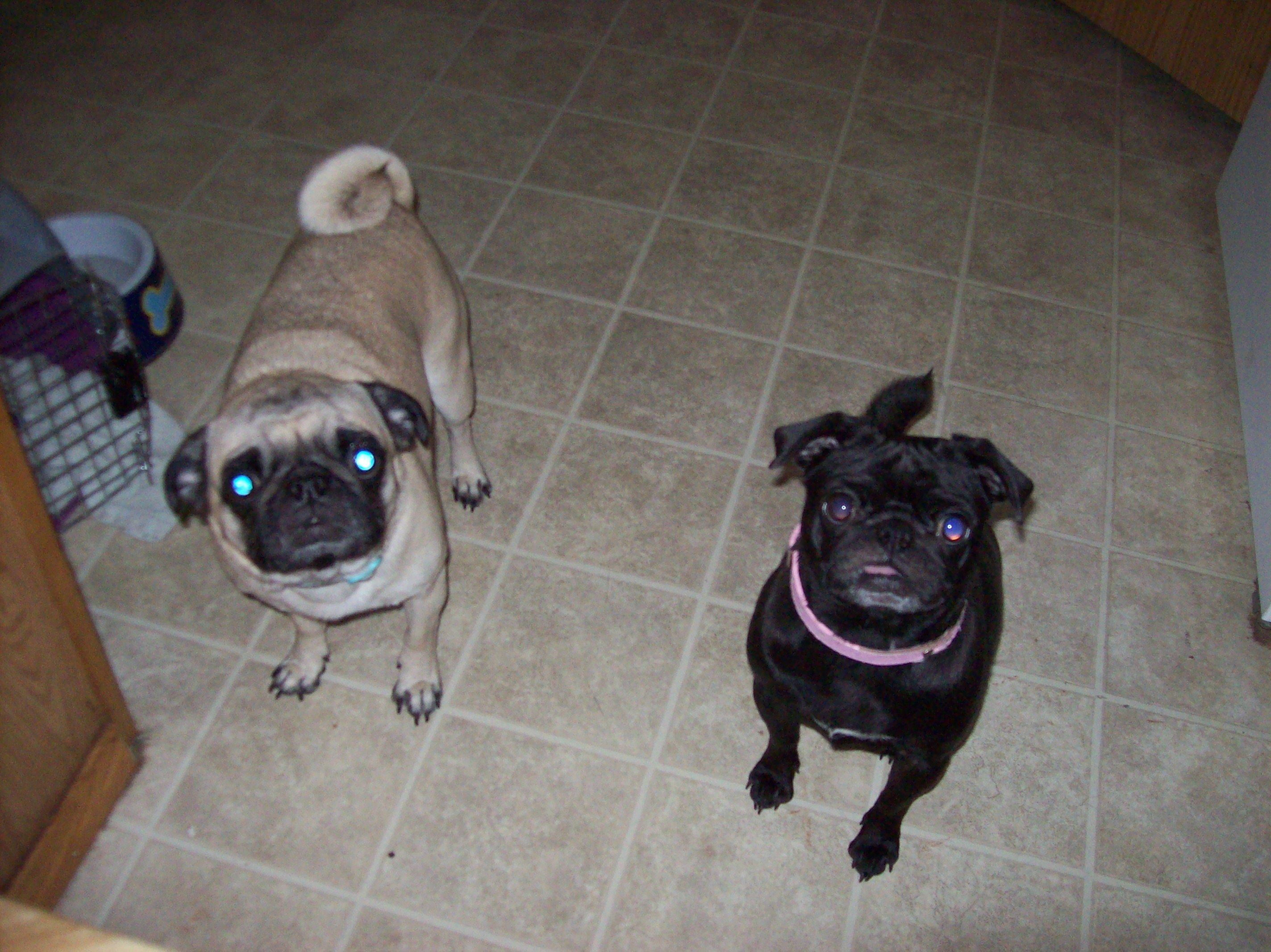 Glancing My Ny Looking Dogs My Ny Looking Dogs Pugs Kisses Pinterest Dog Most Ny Looking Dogs Ny Looking Cartoon Dogs bark post Funny Looking Dogs
