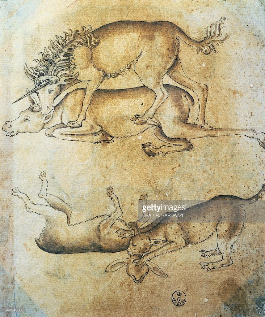 Unicorn attacking a cow and leopard attacking a sheep, study of animals, by Leonardo da Vinci, drawing