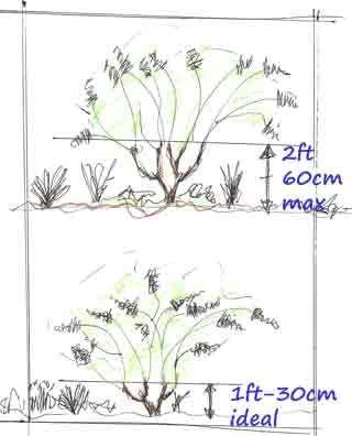 Hydrangea Pruning Diagram Flower Gardening