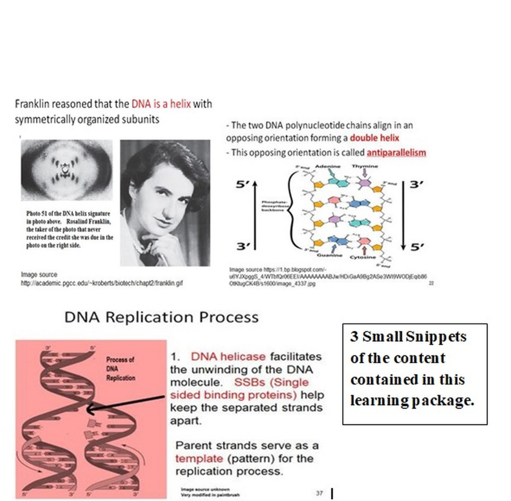 DNA Structure and Replication Learning Activities for AP