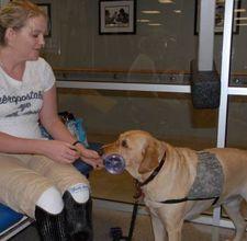 How To Make Service Dog Vests Service Dog Training Service Dogs