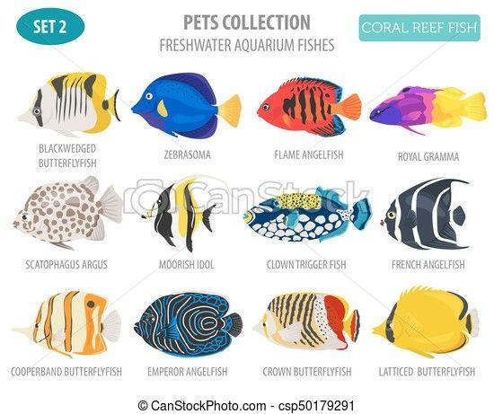 Vector Freshwater Aquarium Fish Breeds Icon Set Flat Style