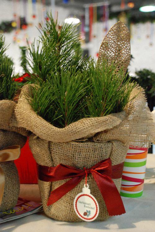 Www Dreamgardens Ro Plante Marturii Evenimente Plante In Ghivece