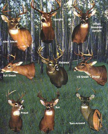 Deer Mounting Options Hunting Pinterest Taxidermy