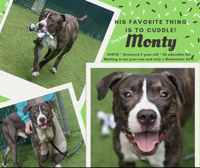 MONTY TO DIE 04/25/19 Nyc dogs, Dogs, Pet adoption
