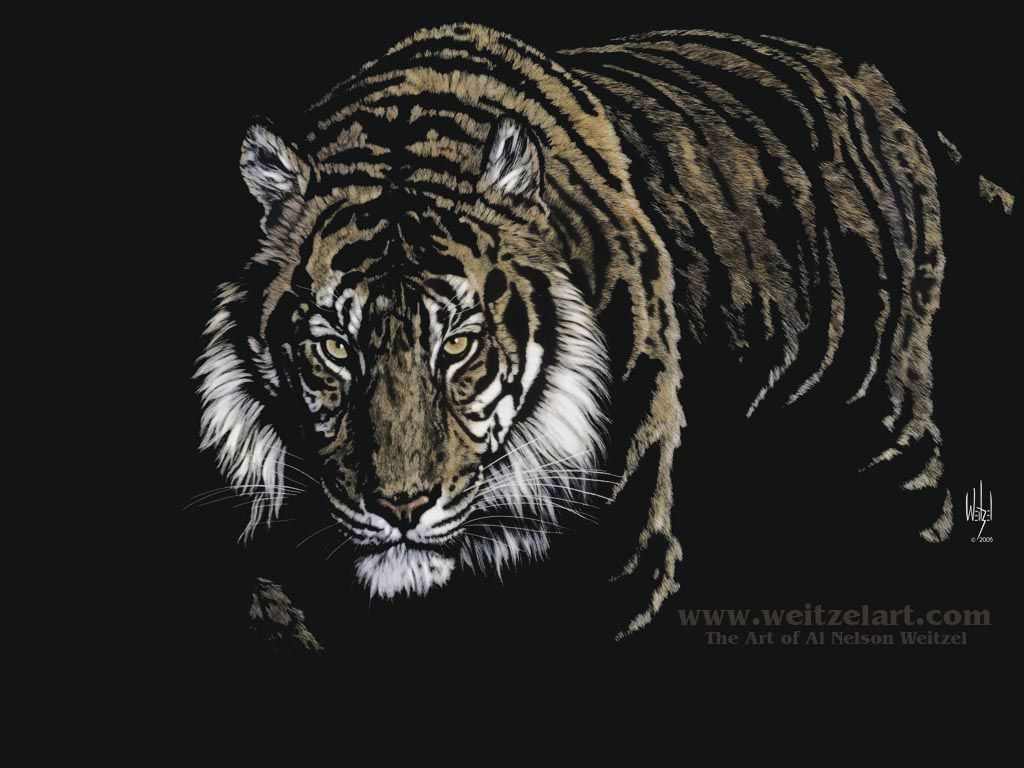 Tiger Wallpaper And Pictures Fantasie Tiere Tiere Fantasie