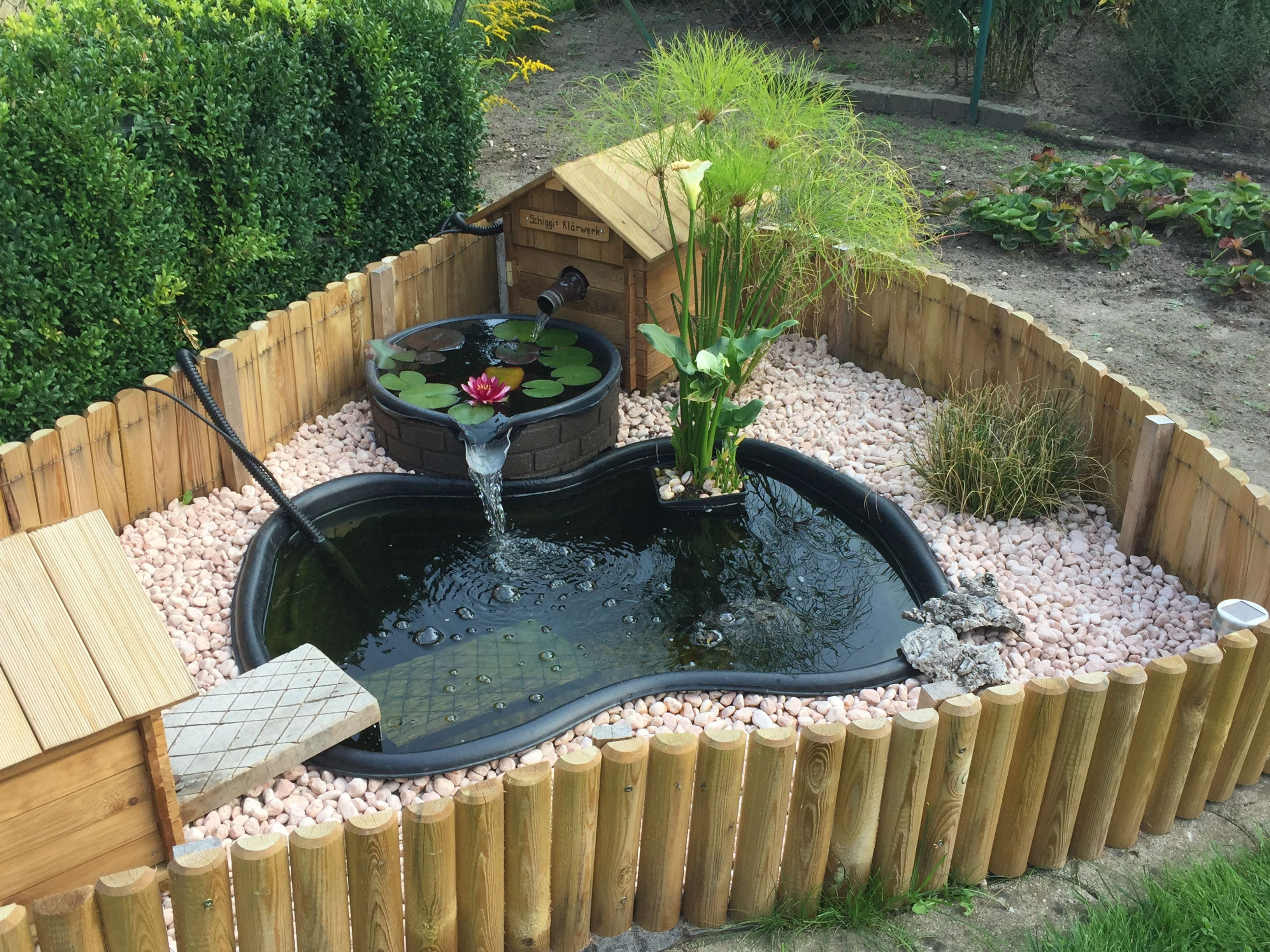Pin by kay boston taylor on turtle ponds pinterest for Estanque para tortugas