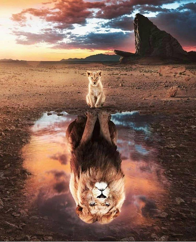 """Nature Travel World auf Instagram: """"Der König der Löwen 🦁 ~ Südafrika ⠀⠀⠀⠀⠀⠀⠀⠀⠀ Artist: @ nogar007 Amazing! 😉 😉 …"""