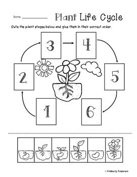 plant life cycle cut paste worksheet plants life cycles plant life cycle worksheet. Black Bedroom Furniture Sets. Home Design Ideas