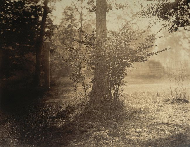 Gustave le gray french 1820 1884 tree study forest - Le photograph ...