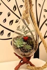 teardrop and rope hanging terrarium - Google Search
