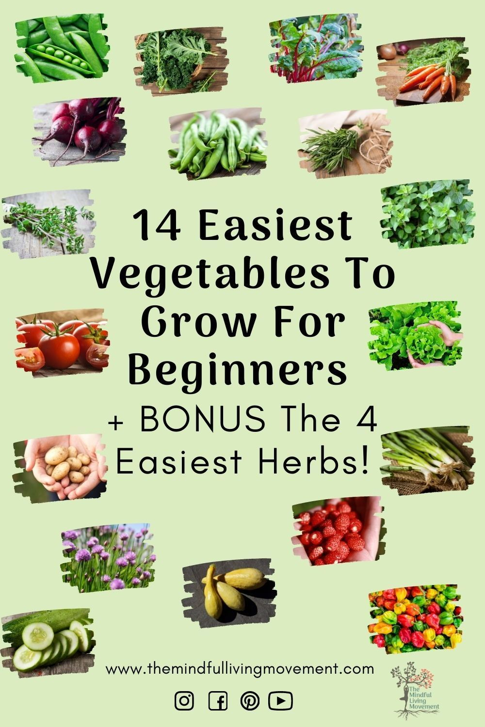 I narrowed it down to 14 vegetables and 4 herbs to give you a large selection of options to choose from to start your garden. #beginnergardener #urbangardening #growyourownfood #howtogarden #easygardening #gardentips #gardenideas #diygarden #canadiangardening #kidsgardening#gardenblog