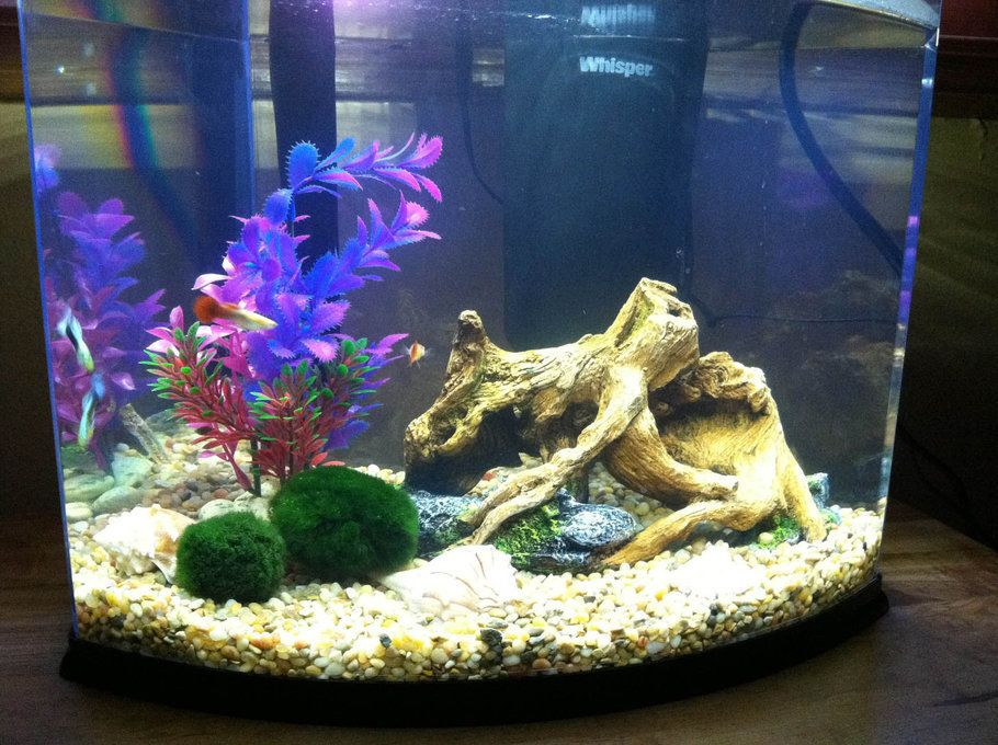Beautiful Marimo Moss In 5 Gallon Tank Rate My Fish