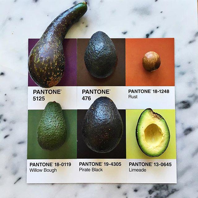 All About Avocado Pantoneposts Pantone Pantone Color Photo