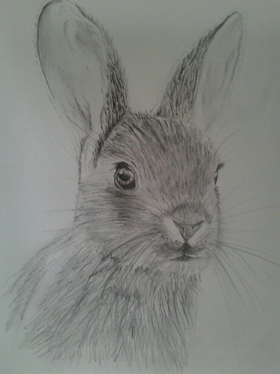 Ik heb hetzelfde konijn getekend als mijn zusje! | Konijn