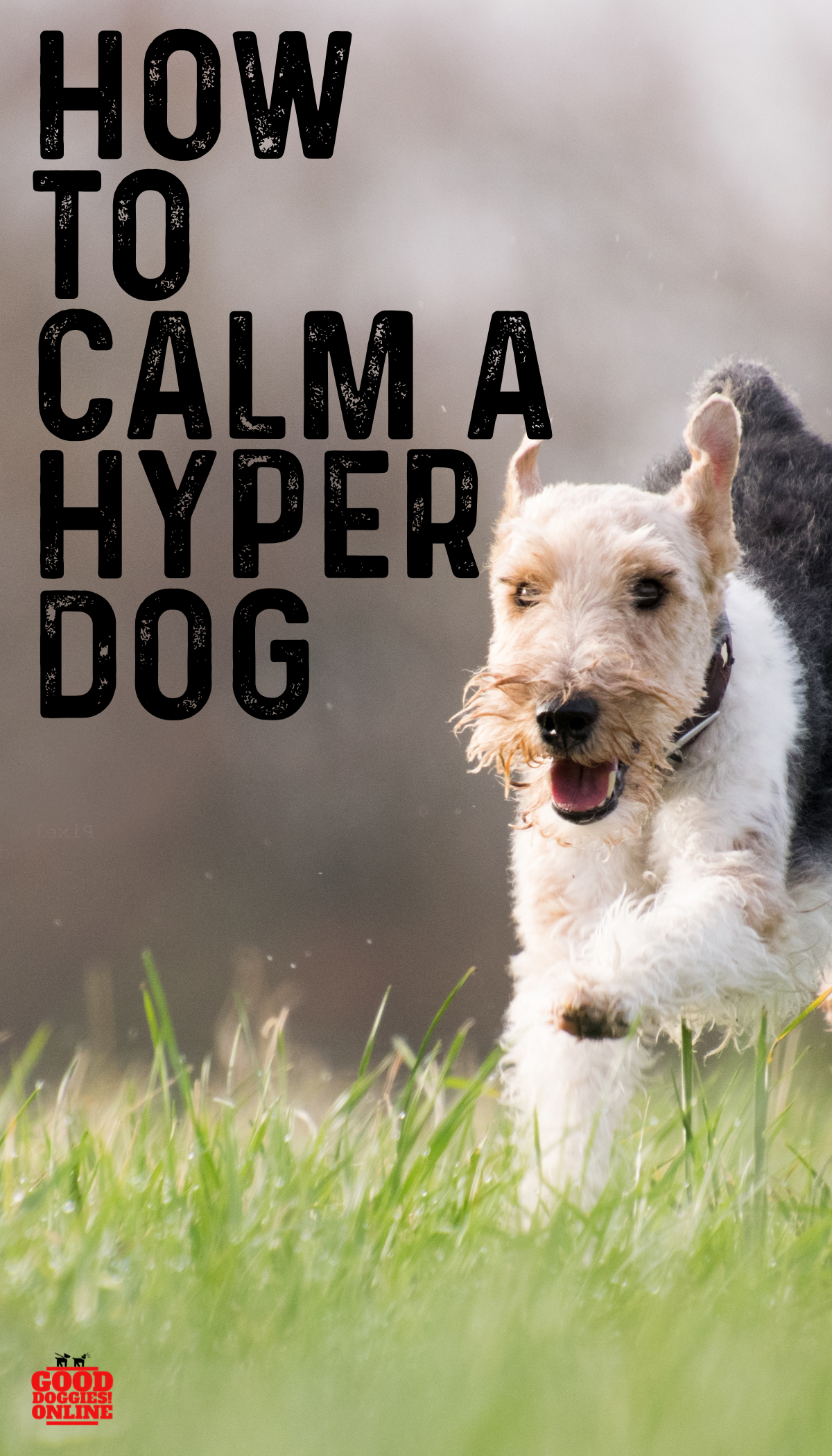 Simple Ways on How to Calm a Hyper Dog Hyper dog, Dogs