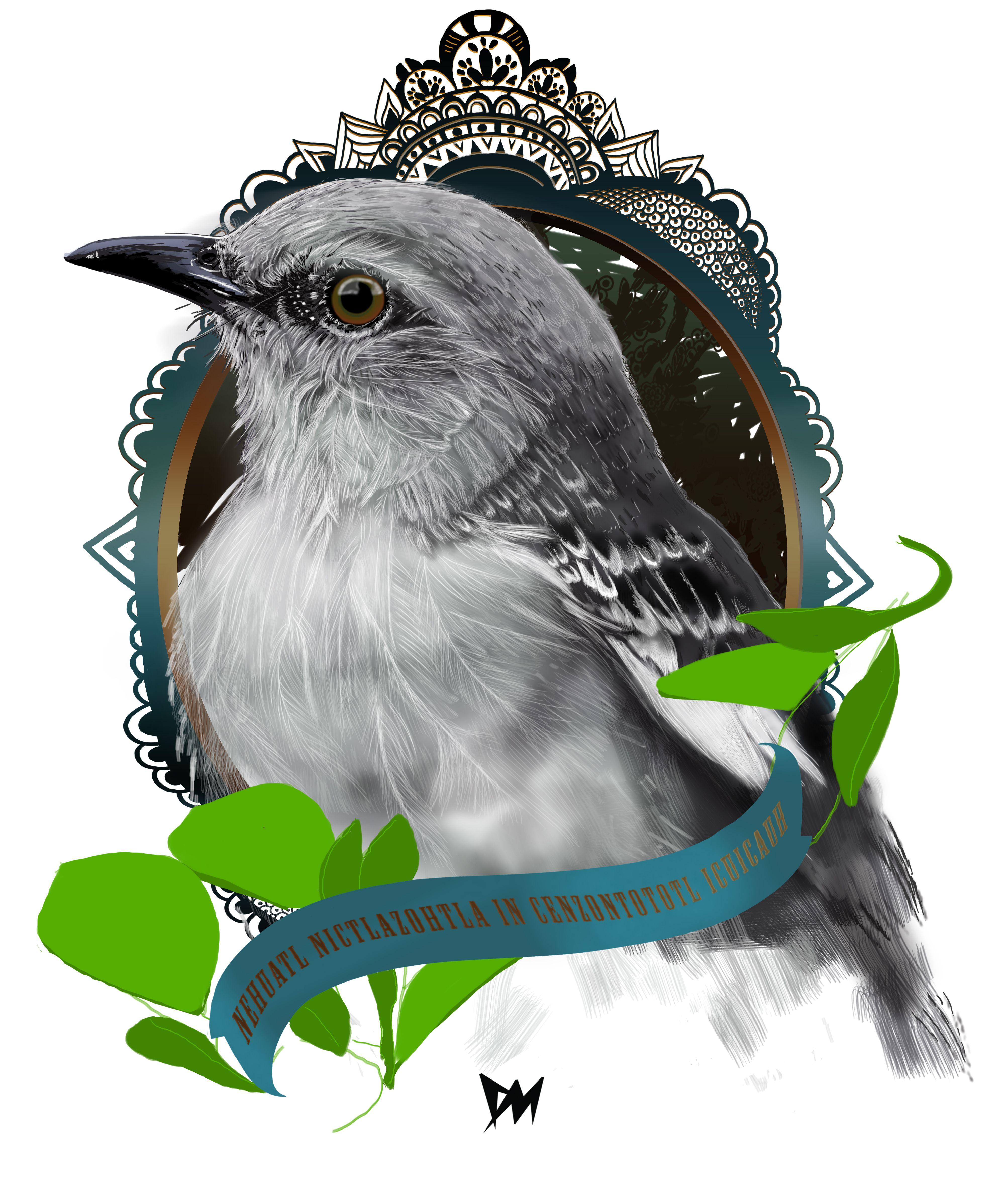 Digital art - Cenzontle bird.   Ilustraciones   Pinterest   Ave ...