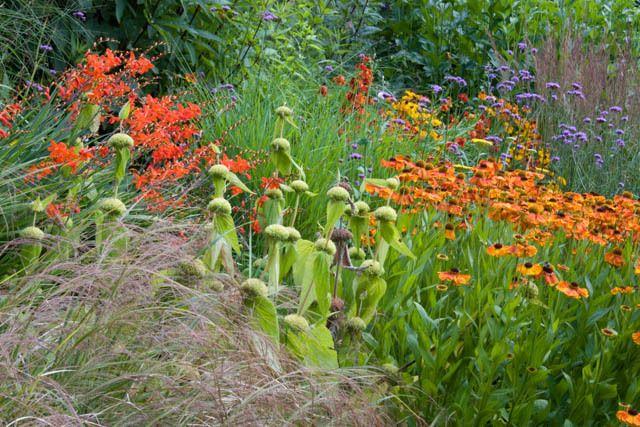 Garden ideas border ideas perennial combinations plant for Perennial plant combination ideas