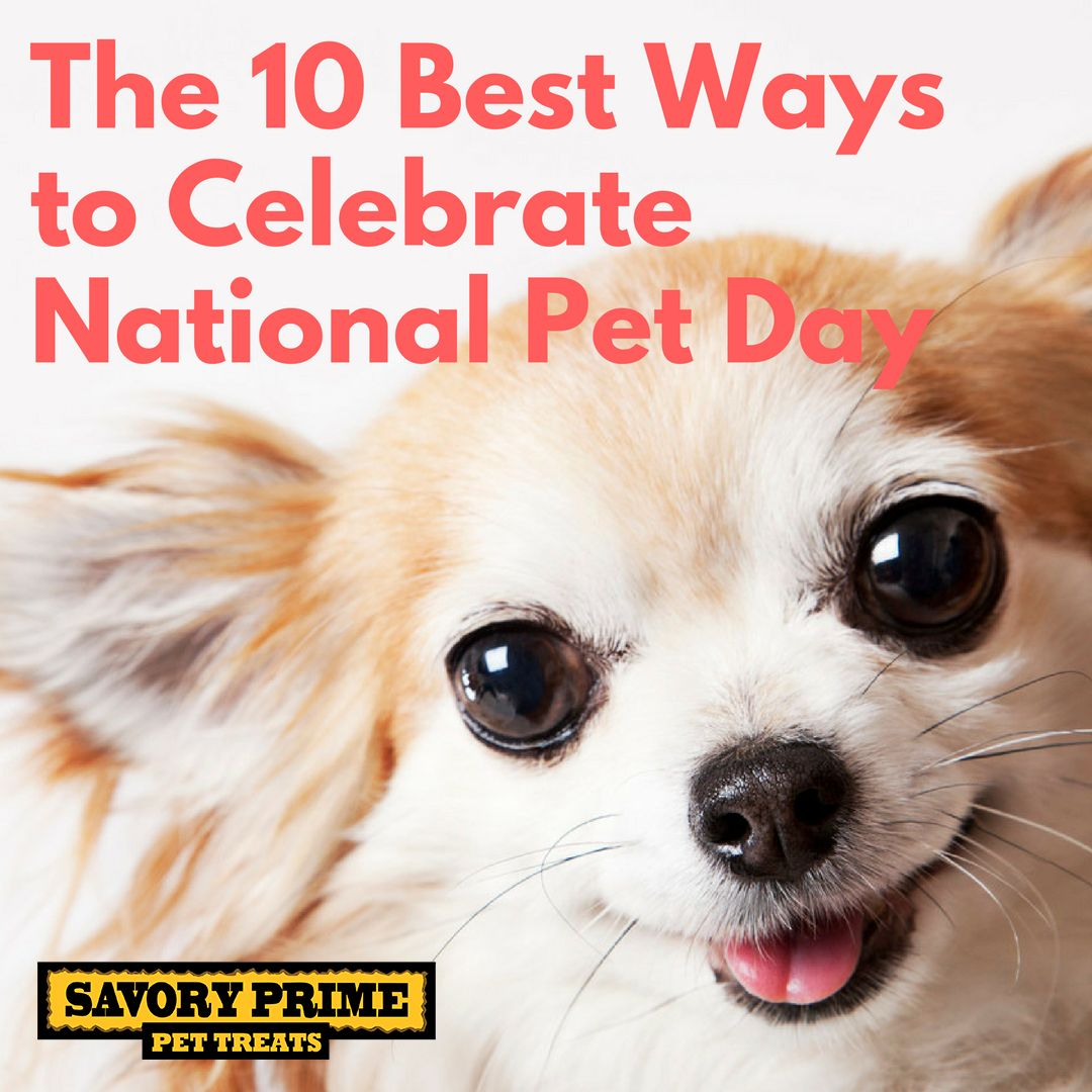The 10 Best Ways to Celebrate National Pet Day National