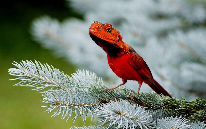lizzardbird