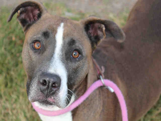 Adopt A Pet In Colorado Springs Humane Society Of The Pikes Peak Region Pets