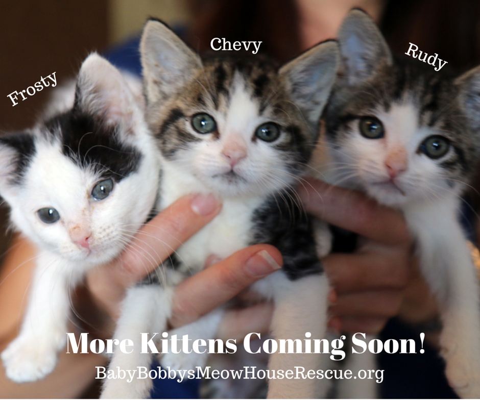 Kittens Are Coming Soon It Is Kittenseason And Our Catrescue Is Full Volunteers Are Fostering About 50 Kittens Kitten Season Cat Adoption Kitten Rescue