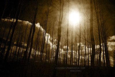 Marismas - Loose Tracks, 2012