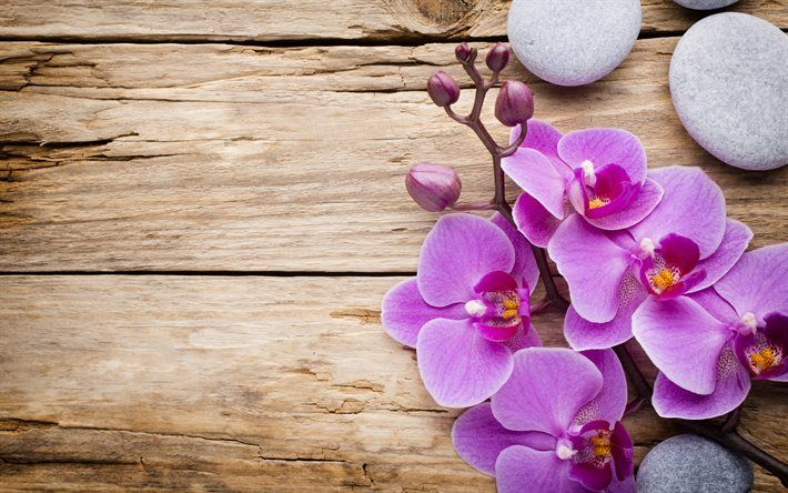 Download Wallpapers Pink Orchid Wood Background Wooden Boards Tropical Flowers Orchids Besthqwallpapers Com Orchid Illustration Flower Background Wallpaper Flower Backgrounds