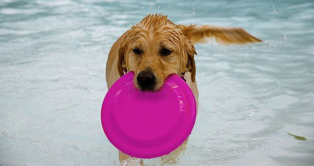 Dog Expert Advice On Swimming
