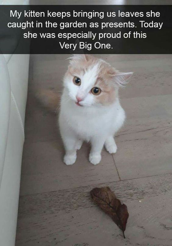 Click The Photo For More Funny And Cute Cat Videos And Photos Cutecats Catloverscommunity Cats Kittens Catvideos Cute Cat Gif Cute Animals Funny Cat Memes