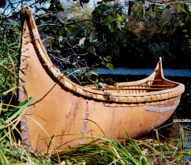 Birch Bark Canoe   Canoe building, Canoe, Birch bark