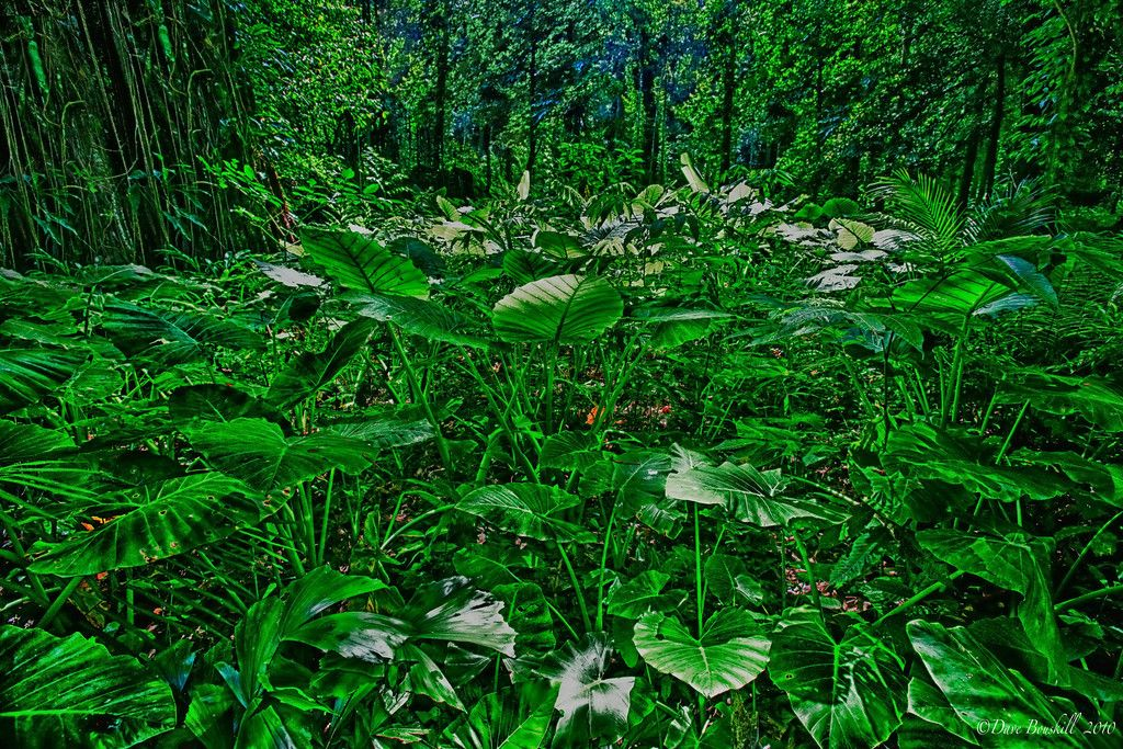 tropical-forest-thailand