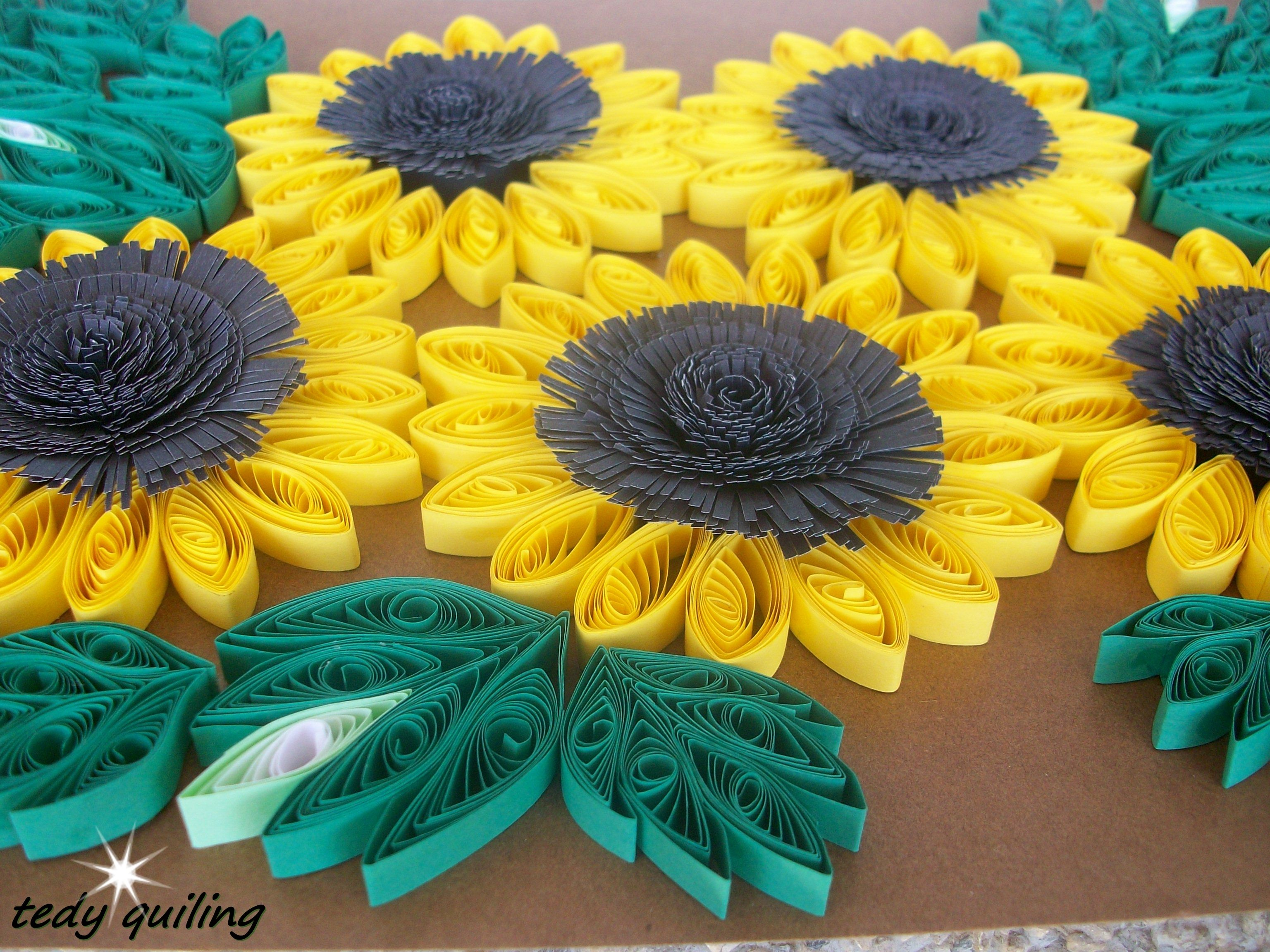 girasoles /  sunflowers