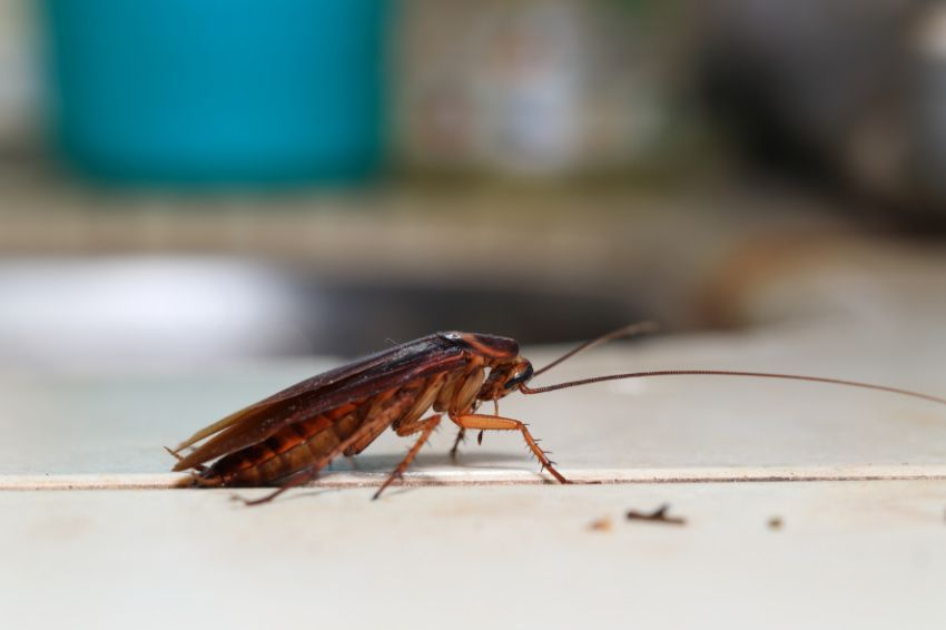 How to easily get rid of roaches at home in 2020 house