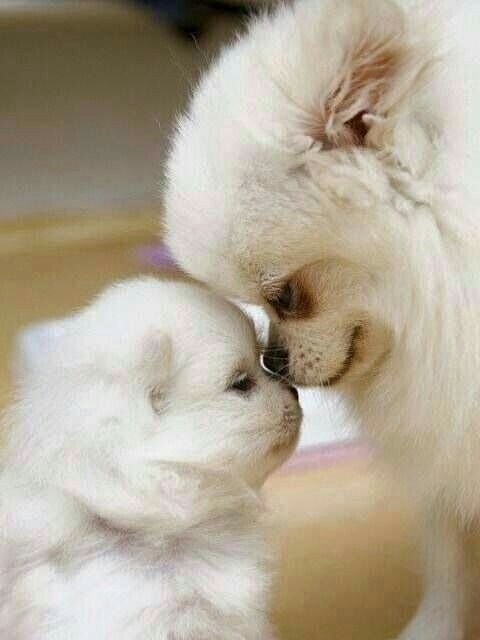 Pin By Ida Salmi On Mothers Day Animals Cute Animals Cute Dogs