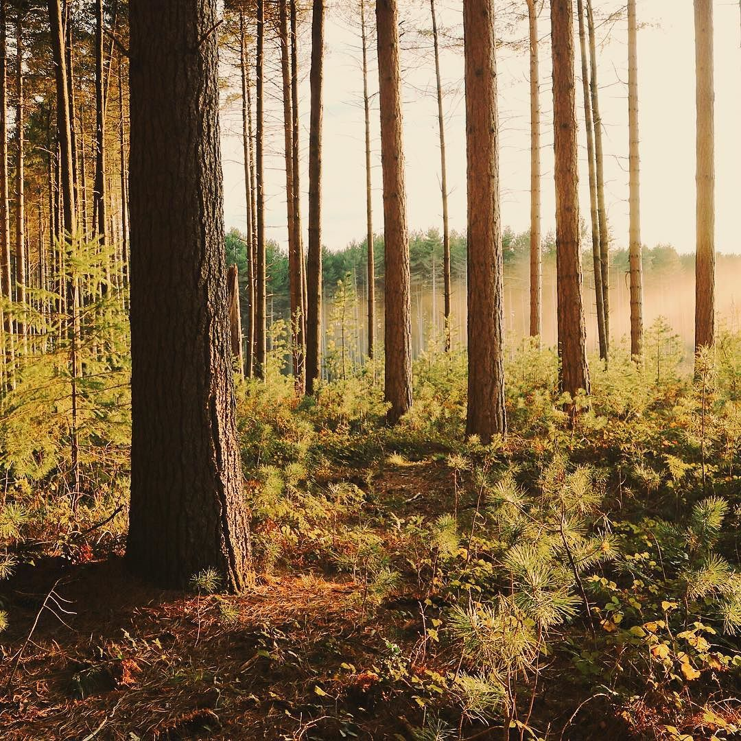 Forests are my favourite!!  by shannnaya