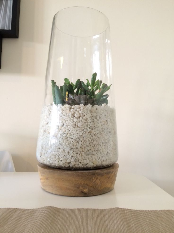 Photo of 7 Best Made at Home Terrariums Images On Pinterest Concept Of Diy Succulent Terr…