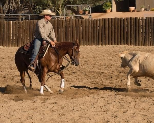 Cutting Horse for Sale - Little Hydrive Gal - For more information click on the image or see ad # 55486 on www.RanchWorldAds.com