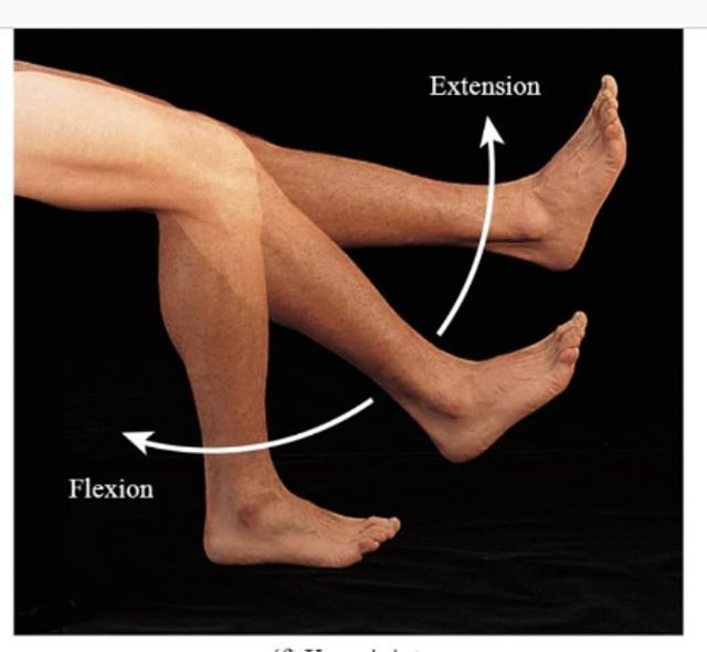 Flexion and extension at the knee joint (hinge joint) can ... Hinge Joint Knee
