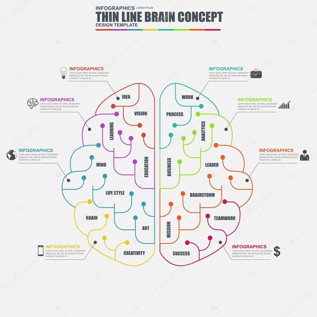 Elementos de línea delgada plana negocio cerebro infografía vector ...
