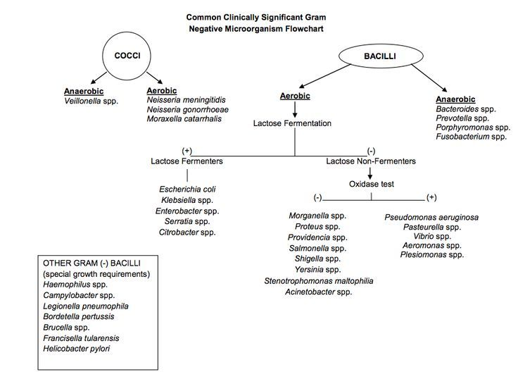 Top Unknown Gram Negative Bacteria Flow Chart Wallpapers College