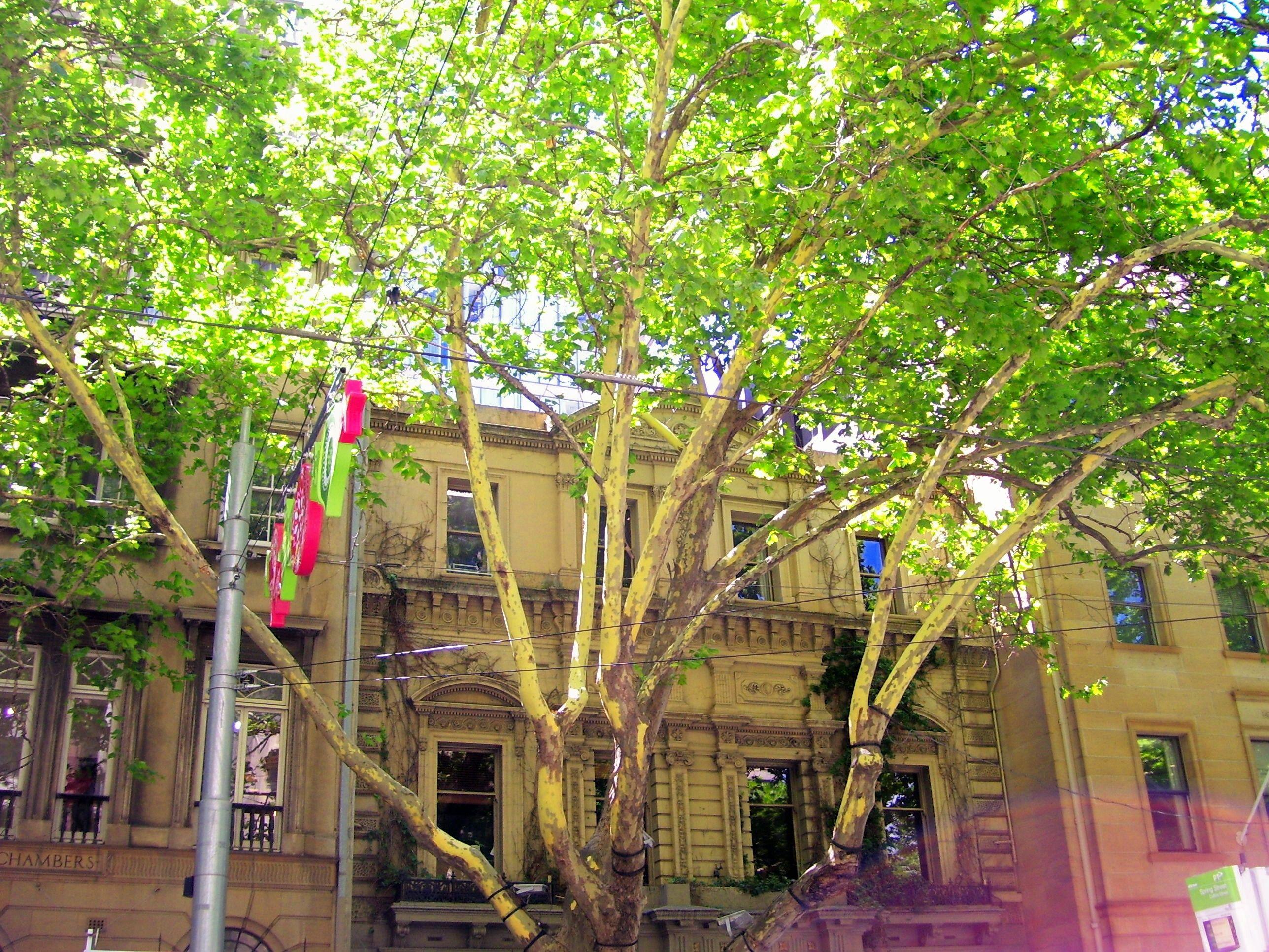 Historical Building Paris end of Collins Street Melbourne