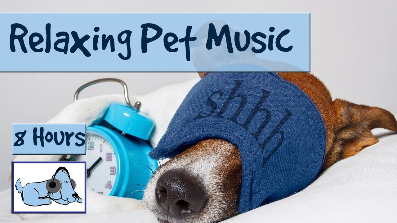 8 HOURS OF RELAX MY DOG MUSIC!! Longest Video Yet! Relaxing Pet Music, S...