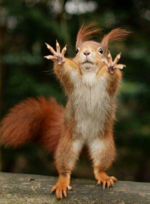 Ginger squirrel. Nuff said.