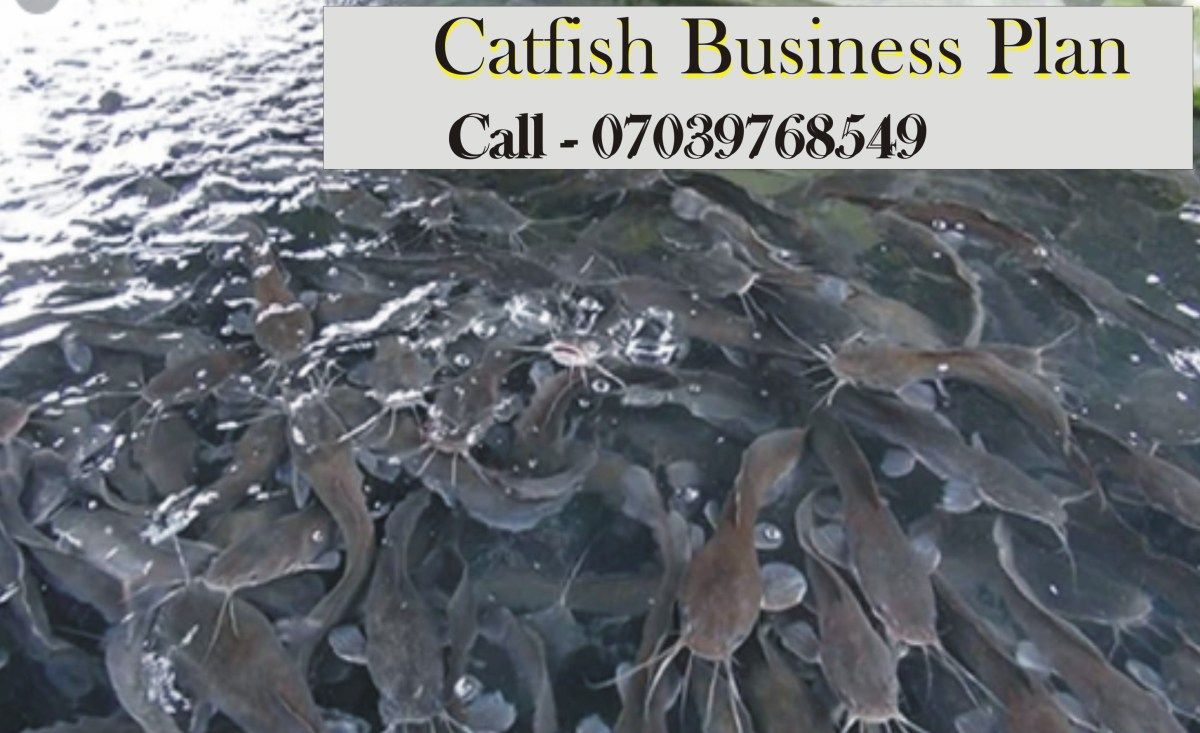 Catfish Farming Business Plan In Nigeria PDF File