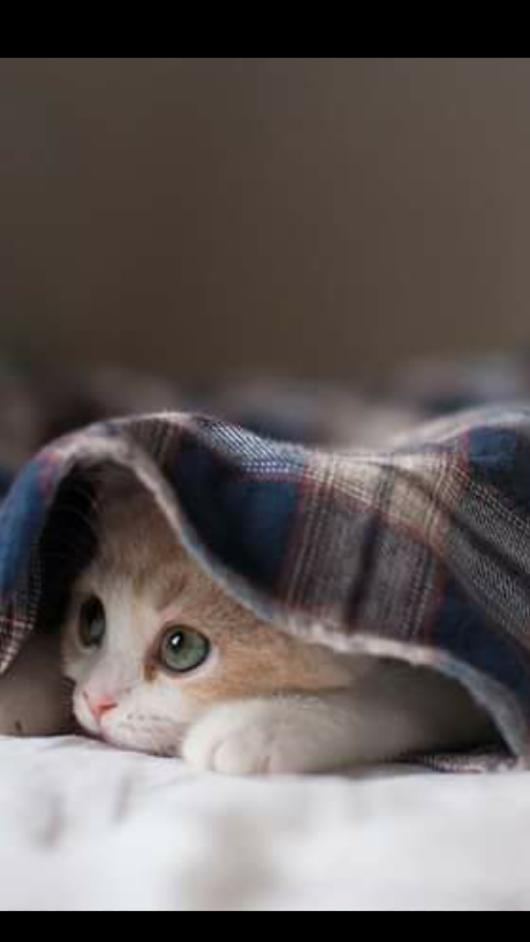 Https Plus Google Com Susse Tiere Katzen Susse Katzen