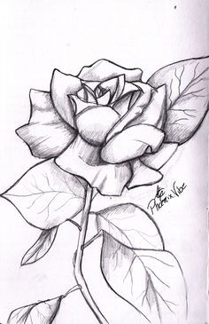 Art Sketches With Images Pencil Drawings Of Flowers Roses